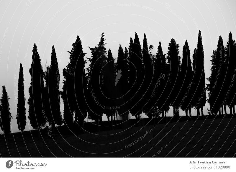 Toskana - Scherenschnitt Himmel Natur Pflanze Baum Landschaft Umwelt Ordnung Wolkenloser Himmel eng Einigkeit typisch Baumreihe