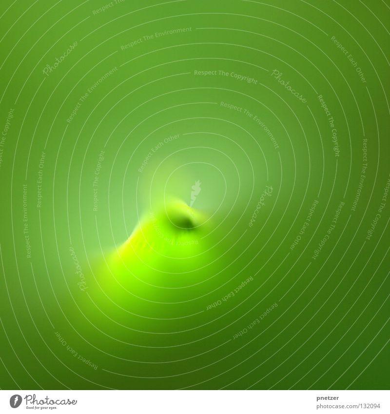 Grün grün Blatt Unschärfe Pflanze Blume Design Makroaufnahme Nahaufnahme Sommer Spitze Strukturen & Formen