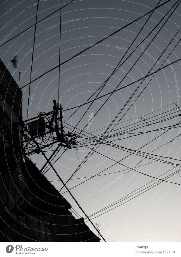 Energiebereitstellung Himmel Kraft Vogel Umwelt fliegen Energiewirtschaft Elektrizität Netzwerk Technik & Technologie Kommunizieren Kabel Asien Flügel Telefon