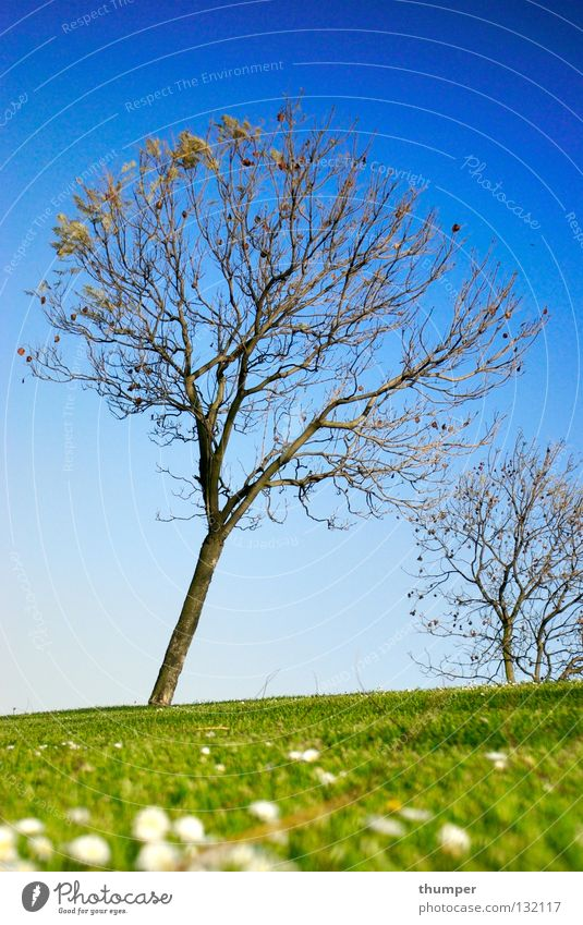 Tree springen Frühling normal