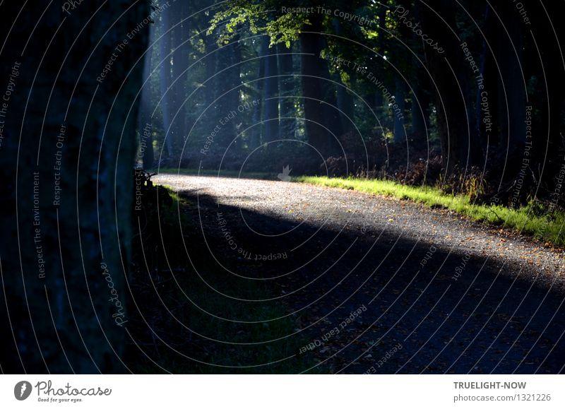 Heimkommen | mit Licht auf gutem Weg Natur Pflanze blau grün Sommer Baum Erholung Einsamkeit Blatt ruhig Wald Leben Gras Gesundheit träumen Zufriedenheit