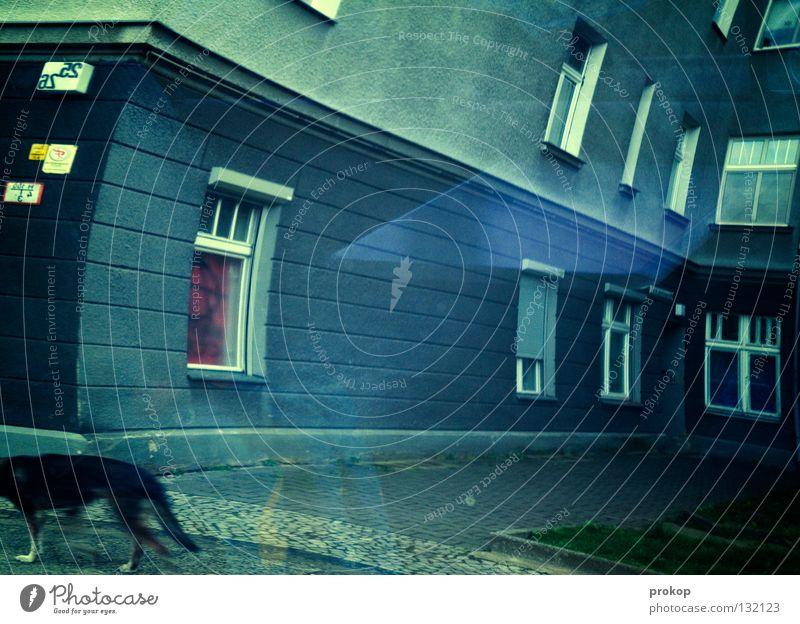Die Realität neben deiner Hund blau Tier Haus Fenster Leben Architektur träumen Zeit Raum Wind Angst verrückt Häusliches Leben Kommunizieren Weltall