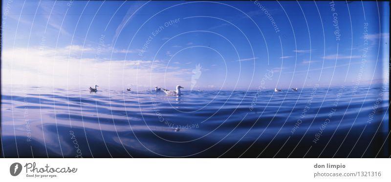 offene see blau Sommer Wasser ruhig Vogel Stimmung Horizont Regen Idylle warten Ausflug beobachten Schönes Wetter Ostsee Gelassenheit Möwe
