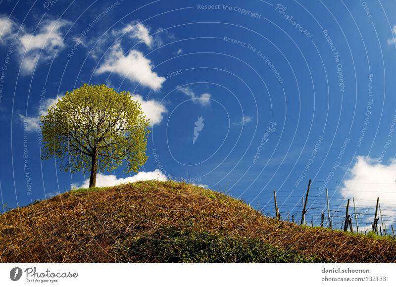 Frühlingsbaum bei mir um die Ecke schön Himmel Baum Blume grün blau Sommer ruhig Wolken gelb Ferne Erholung Wiese Blüte Gras