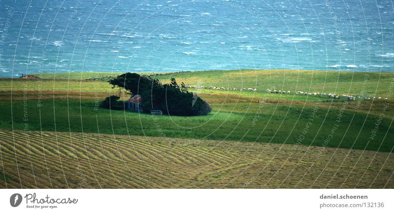 neuseeländischer Seitenwind Wasser Meer grün blau Ferien & Urlaub & Reisen Haus Wiese Wellen Küste Hintergrundbild Wind Wetter Sicherheit Schutz Landwirtschaft Hütte
