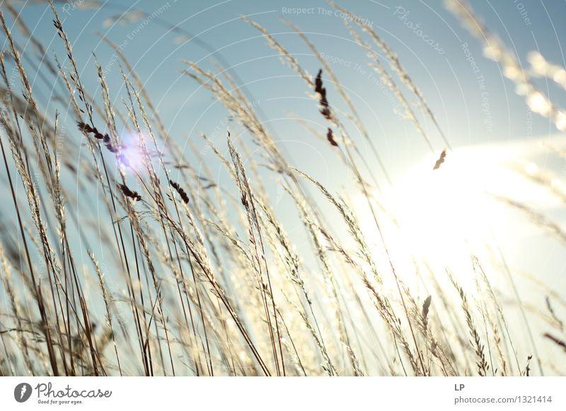 Sonnenuntergang im Weinberg 4 Himmel Ferien & Urlaub & Reisen schön Erholung ruhig Wärme Leben Gefühle Wiese Glück Garten Stimmung Park Zufriedenheit Feld