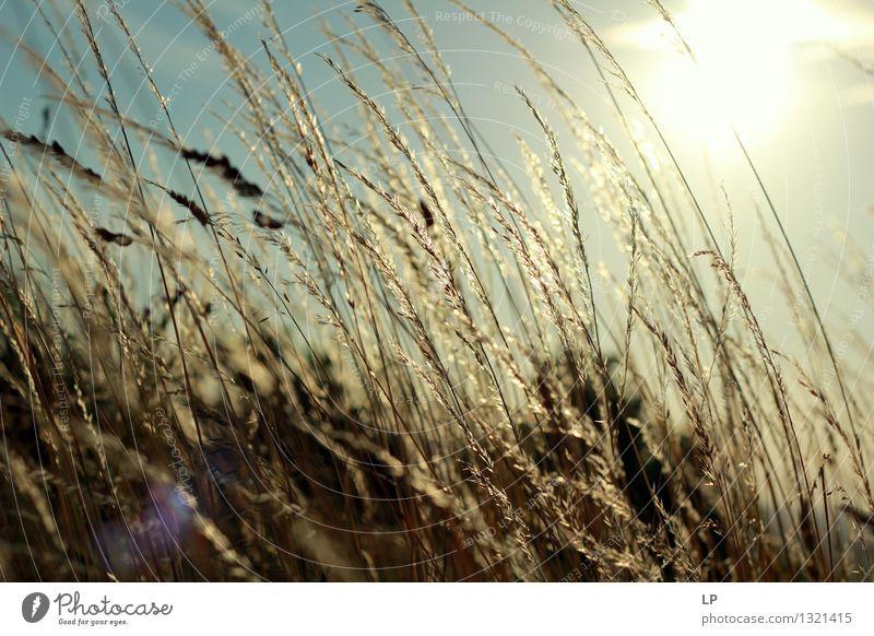 Sonnenuntergang im Weinberg 5 Umwelt Natur Landschaft Pflanze Urelemente Klima Wildpflanze Garten Park Wiese Feld authentisch außergewöhnlich Coolness einfach