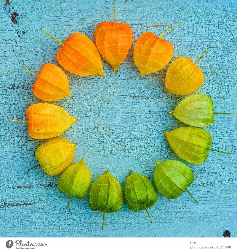 pantone® autumn Natur blau Pflanze grün gelb Herbst orange mehrere rund türkis Herbstfärbung Färbung Physalis Lampionblume Farbkreis