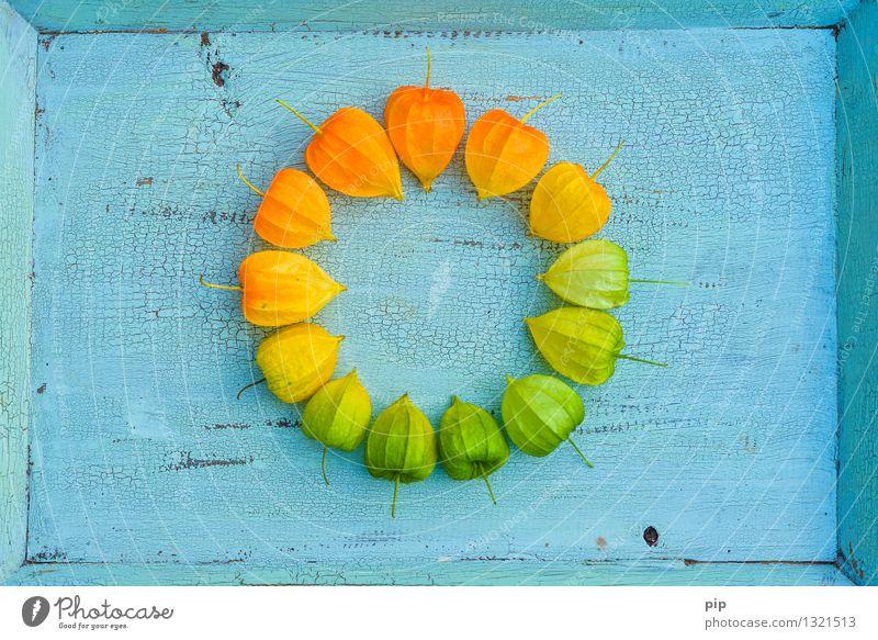 farbkreis blau Pflanze grün gelb Herbst orange mehrere rund türkis herbstlich Herbstfärbung Färbung Lampionblume Farbkreis
