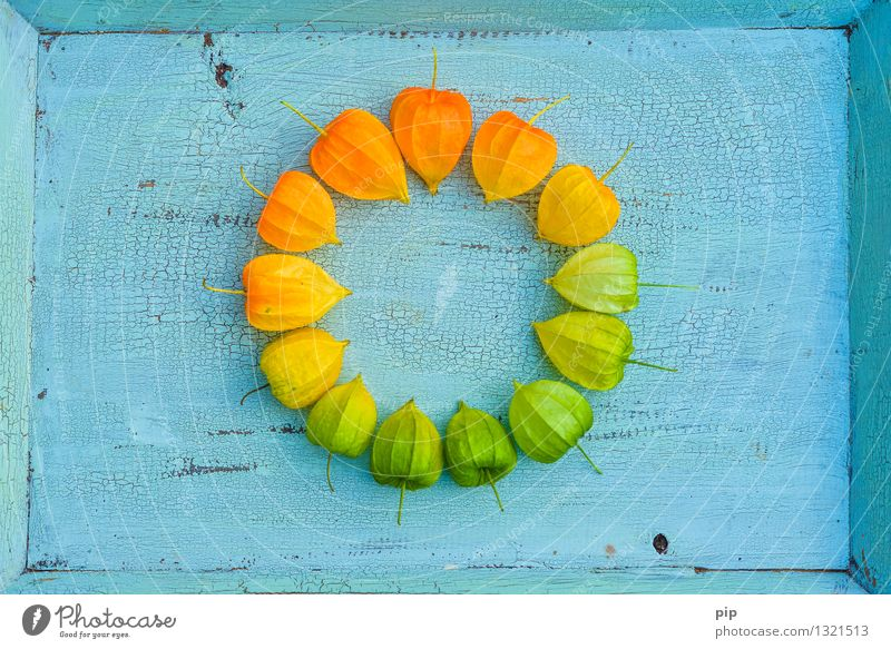 farbkreis Pflanze Lampionblume blau mehrfarbig gelb grün orange türkis Herbst Farbkreis rund mehrere Färbung Herbstfärbung herbstlich Farbfoto Muster