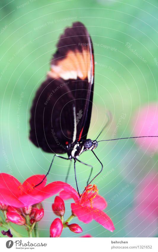 wenn männer solche zungen hätten... Natur Pflanze Tier Frühling Sommer Schönes Wetter Blume Blatt Blüte Garten Park Wiese Wildtier Schmetterling Tiergesicht