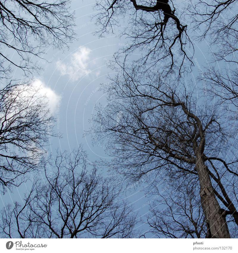schöner Herbst II Natur Himmel Baum blau ruhig Wolken Wald Holz Traurigkeit Wärme braun Ende Ast Vergänglichkeit zart