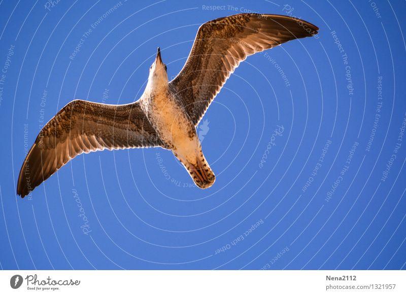 hoch hinaus l Umwelt Natur Tier Luft Wetter Schönes Wetter Vogel Flügel 1 fliegen Ferien & Urlaub & Reisen ästhetisch elegant frei schön Glück Fröhlichkeit