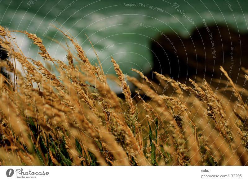 GRASS Meer Gras Wind Felsen Klippe Neuseeland Lieblingsplatz