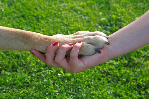Girl with red nails holding a dog paw feminin Hand 1 Mensch Haustier Hund Liebe Freude Freundschaft Team Teamwork girl friend friendship affection pet meadow