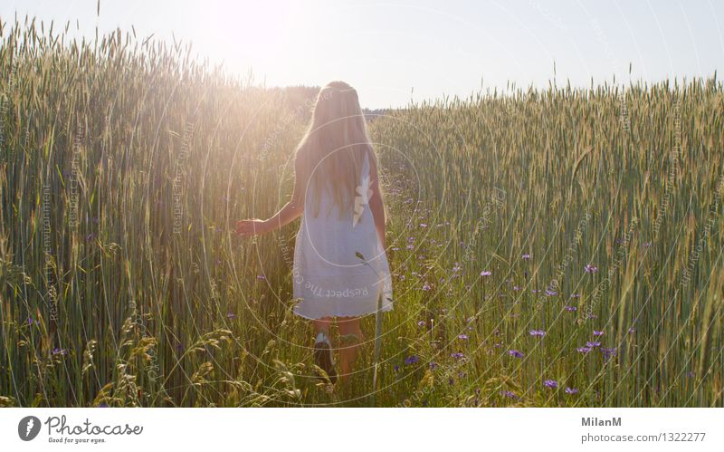 Träumen Mensch Kind Sommer Mädchen Wärme Gefühle natürlich Gesundheit Glück Denken Stimmung Zufriedenheit Freizeit & Hobby Feld leuchten authentisch