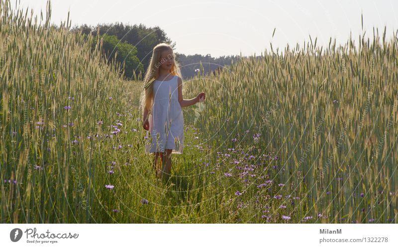 Entdecken Mensch Kind schön Sommer Sonne Mädchen Gefühle Bewegung Gesundheit Glück Denken Stimmung Feld frei Kindheit blond