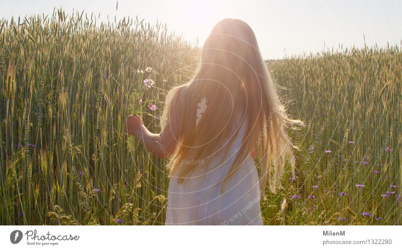 So frei Kind Natur Sommer Erholung Landschaft Mädchen Wärme Liebe Gefühle Glück Freiheit gehen hell Zufriedenheit Feld Kindheit