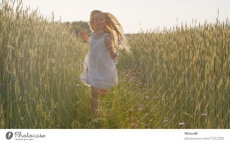 Voller Freude Mädchen 1 Mensch 3-8 Jahre Kind Kindheit Natur Sommer Schönes Wetter Wärme Nutzpflanze Feld Bewegung entdecken laufen rennen ästhetisch blond frei