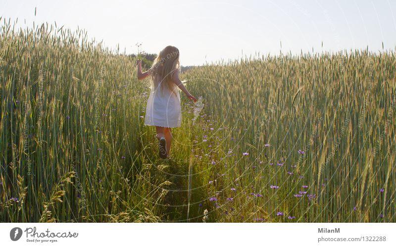 Sommerflirren Mädchen 1 Mensch 3-8 Jahre Kind Kindheit Natur Feld Bewegung entdecken lachen rennen ästhetisch blond Duft Wärme Freude Glück Fröhlichkeit