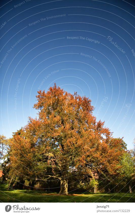 Es schreit nach Frühling. Baum Park Wald grün Pflanze Herbst Spaziergang Himmel Natur Außenaufnahme