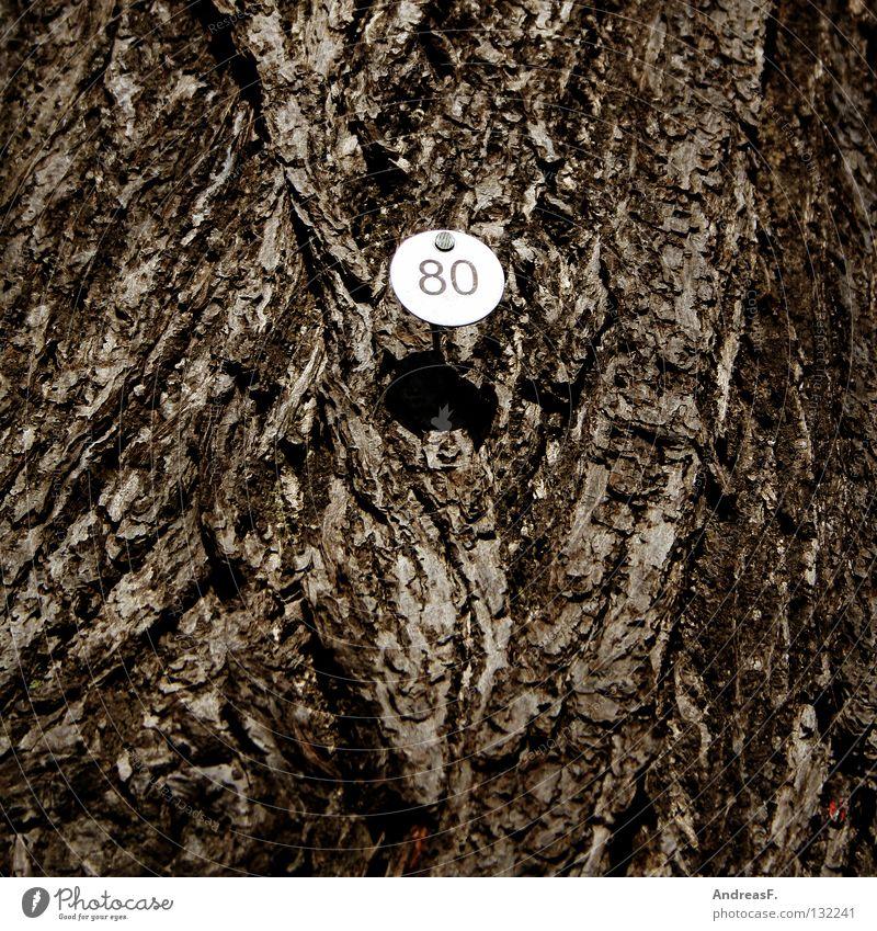 Achtzig Baum Holz Schilder & Markierungen Ziffern & Zahlen 8 Baumrinde zählen Jubiläum