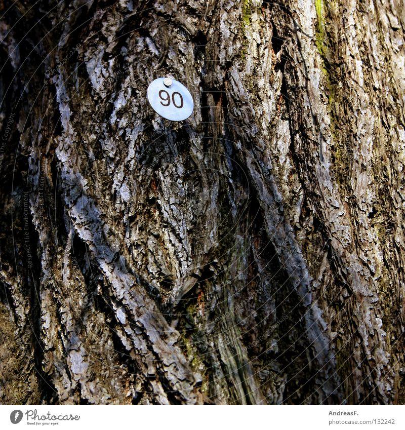 Neunzig alt Baum Holz Schilder & Markierungen Ziffern & Zahlen 8 Baumrinde zählen Jubiläum