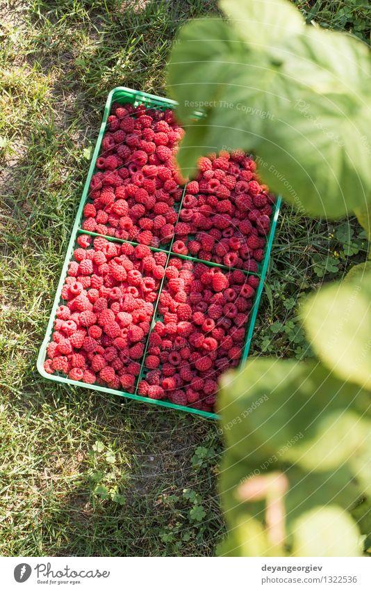 Himbeeren in einer grünen Kiste Frucht Dessert Diät Sommer Garten Blatt frisch hell lecker natürlich rot schwarz Lebensmittel Kasten organisch hölzern reif