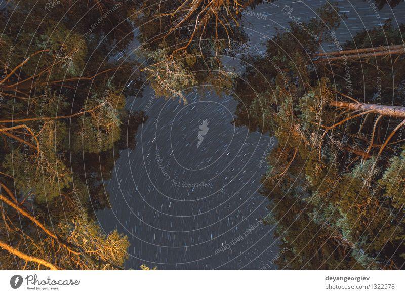 Stary Himmel und Bäume der Nacht schön Tapete Natur Landschaft Baum Wald dunkel blau schwarz sternenklar Stern Astronomie Raum Weg milchig Hintergrund Weltall