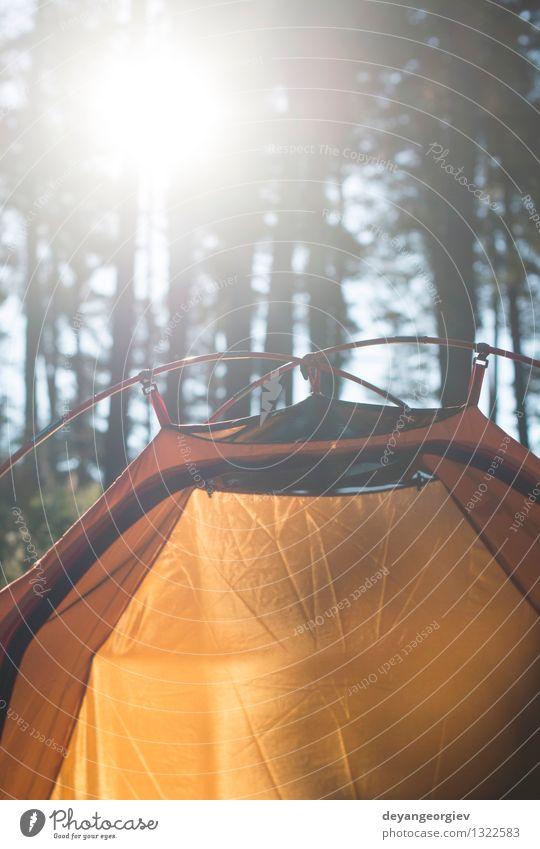 Zelt im Wald am Sonnenlicht schön Erholung Freizeit & Hobby Ferien & Urlaub & Reisen Tourismus Ausflug Abenteuer Camping Sommer Natur Landschaft Baum Gras Park