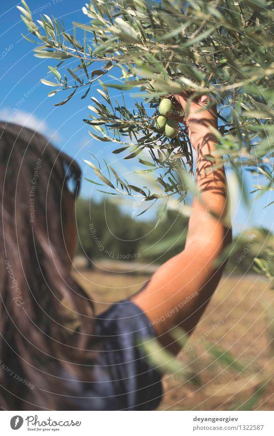 Hand, die Olivenbaumzweig hält. Mensch Natur Pflanze grün Baum Blatt Garten Frucht frisch Ernährung Italien Spanien Gemüse Bauernhof Ernte