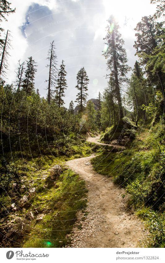 Nicht immer: Der Weg ist das Ziel Natur Ferien & Urlaub & Reisen Pflanze Sommer Baum Landschaft Tier Ferne Wald Berge u. Gebirge Umwelt Wege & Pfade Freiheit