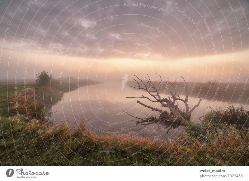 September auf dem Fluss Neman Landschaft Luft Wasser Himmel Wolken Herbst Nebel Pflanze Baum Gras Sträucher Wiese Küste Flussufer Zufriedenheit Erholung erleben