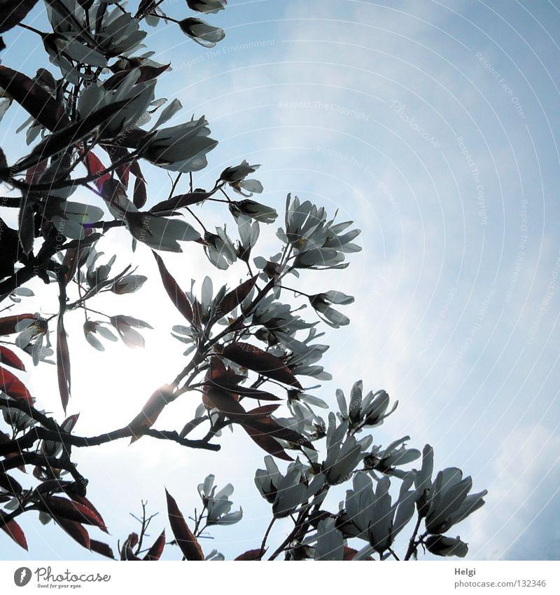 weißer Frühling... Natur schön Himmel Baum Sonne blau Pflanze Blatt Wolken Blüte Park braun Zusammensein Beleuchtung