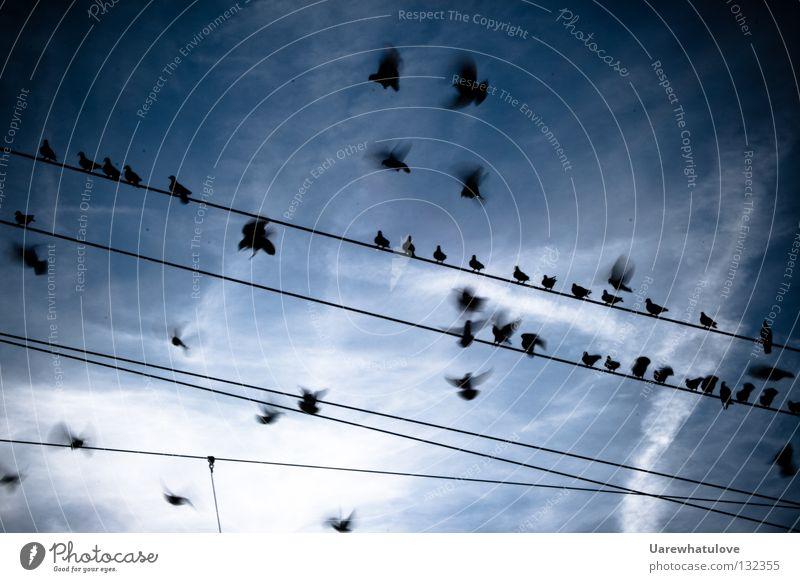 Rückkehr vom Sontagsflug Himmel blau Wolken Erholung Bewegung Zusammensein Vogel fliegen Eisenbahn sitzen Luftverkehr Kabel Flügel Bahnhof Flugzeuglandung Strommast