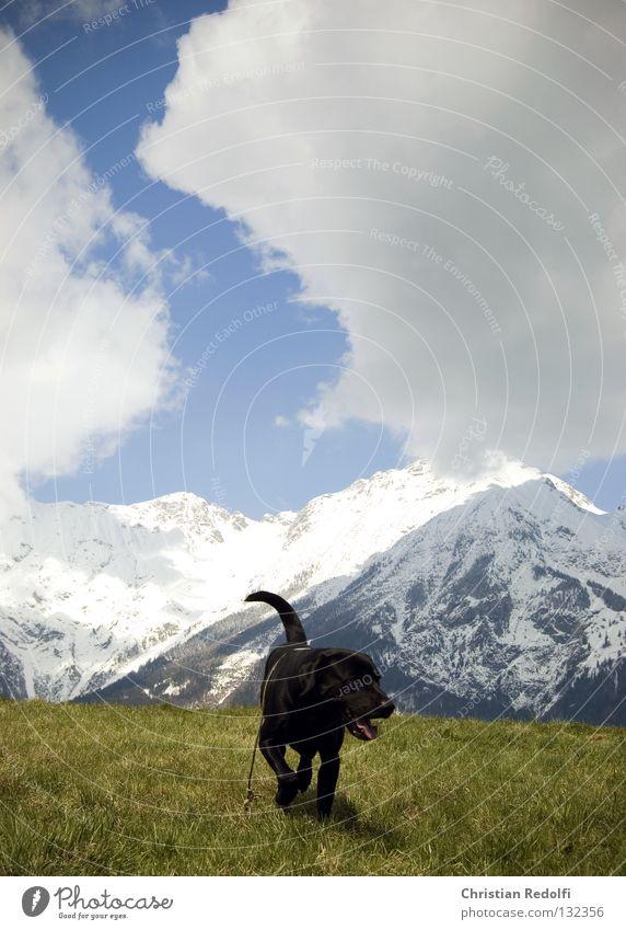 Hundewiese Himmel weiß Sonne grün blau schwarz Wolken Tier Wiese Gras Frühling Landschaft Feld Seil sitzen