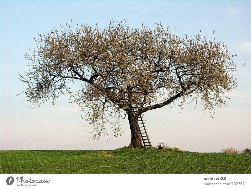 Der Baum im Frühling Wiese Feld Leiter Hochsitz Pflug alt altmodisch Blüte Leben Horizont Himmel Ferne Landschaftsformen Deutschland Reifezeit Composing