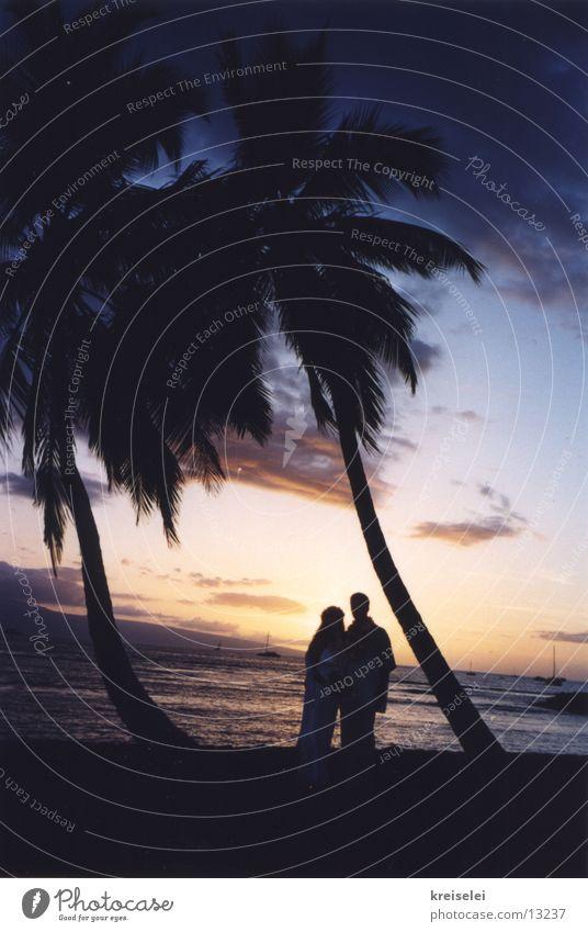 Hochzeit unter Palmen2 Himmel Ferien & Urlaub & Reisen Strand Meer Hochzeit Romantik Kitsch Palme Abenddämmerung Liebespaar Ehepaar Klischee typisch Hawaii Pazifik Flitterwochen