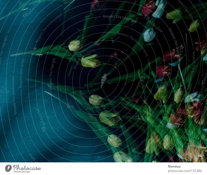 Blumenregen blau schwarz ruhig dunkel Tod Gefühle Bewegung Frühling träumen fliegen Geburtstag Trauer fallen nah Blühend