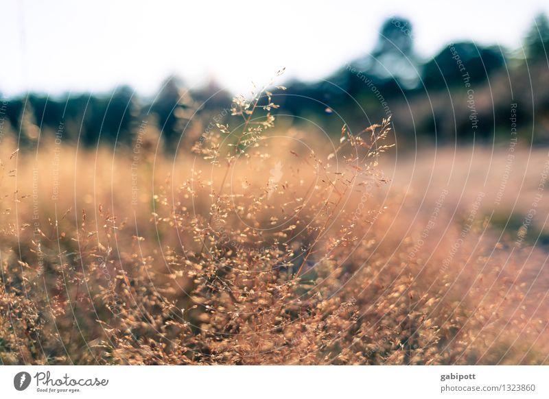 Spätsommer Natur Pflanze Sommer Erholung Landschaft Wald Umwelt Leben Herbst Wiese Gras Zufriedenheit Feld Sträucher Ausflug Wohlgefühl