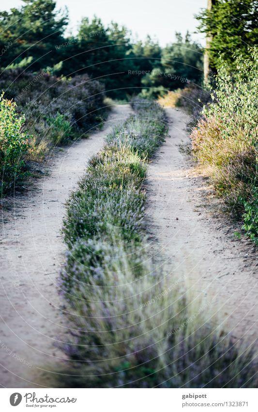 Der Weg und das Ziel und so... Umwelt Natur Landschaft Tier Erde Herbst Schönes Wetter Gras Sträucher Wiese Feld Wald Heide gehen wandern Zufriedenheit Bewegung