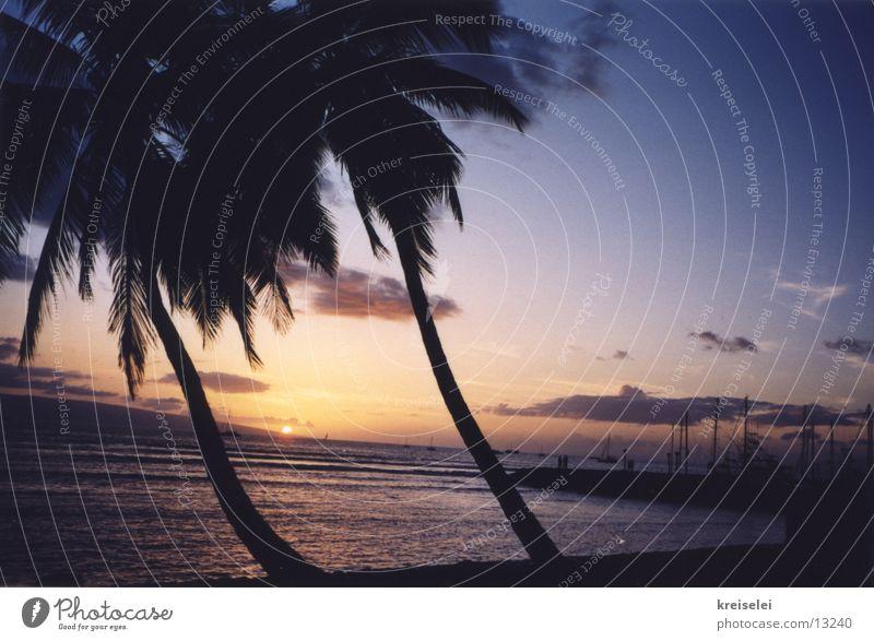 einfach schön Sonnenuntergang Palme Ferien & Urlaub & Reisen Meer Strand Hawaii Himmel typisch Klischee Abenddämmerung Abendsonne Silhouette Palmenstrand