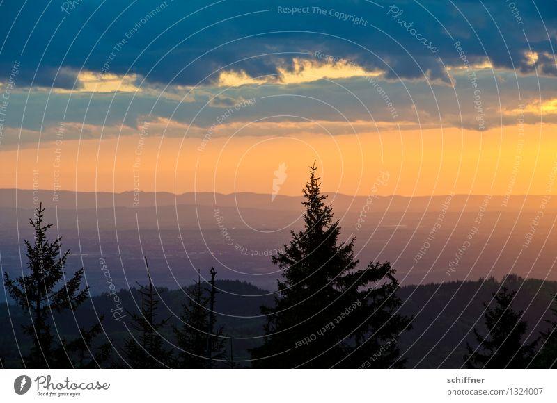 er ist doch schwarz Umwelt Natur Landschaft Pflanze Wolken Schönes Wetter Baum Wald Hügel Berge u. Gebirge Gipfel Tanne Tannenzweig Nadelbaum Schwarzwald