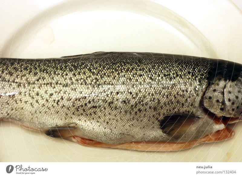 Dinner 02 Meer frisch Ernährung Fisch Fluss fangen Angeln Teller Ekel Schwanz Scheune Schwimmhilfe roh Forelle