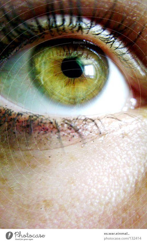 sehen. grün braun Bernstein Pupille schwarz Sommersprossen Wimpern Wimperntusche Makroaufnahme Nahaufnahme Auge grün-braun bernstein-braun-grün lol