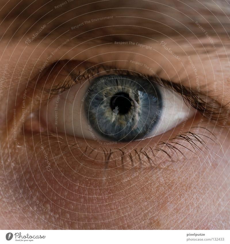 blauäugig Mensch Auge Haut offen Kommunizieren beobachten Konzentration Typ Mann Wachsamkeit Nahaufnahme Augenbraue Sinnesorgane aufwachen Pupille