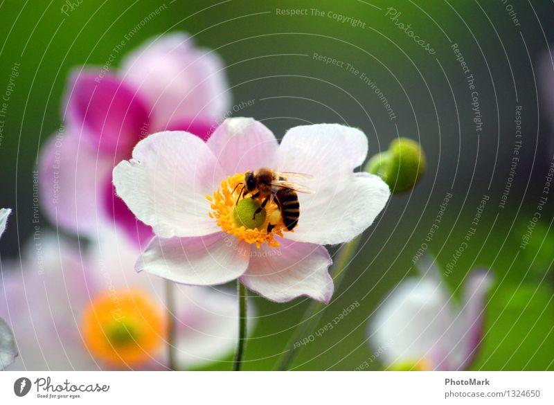 Bienchen und Blümchen Natur Pflanze grün Sommer Blume ruhig Umwelt gelb Blüte Frühling Garten fliegen Arbeit & Erwerbstätigkeit ästhetisch Flügel Schönes Wetter