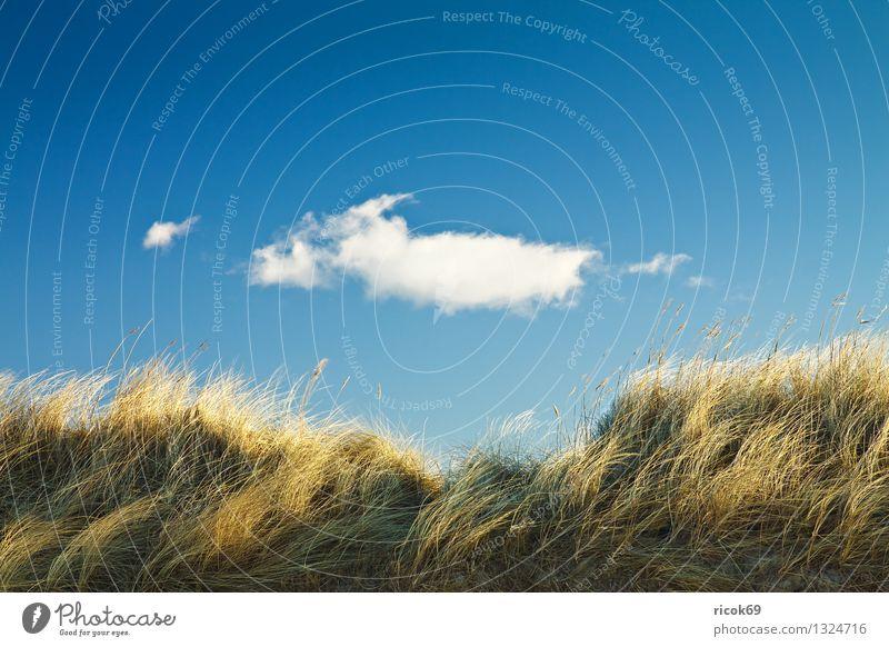 Düne Strand Natur Landschaft Wolken Küste Ostsee blau Ferien & Urlaub & Reisen ruhig Tourismus Dünengras Ostseeküste Himmel Mecklenburg-Vorpommern Tag sonnig