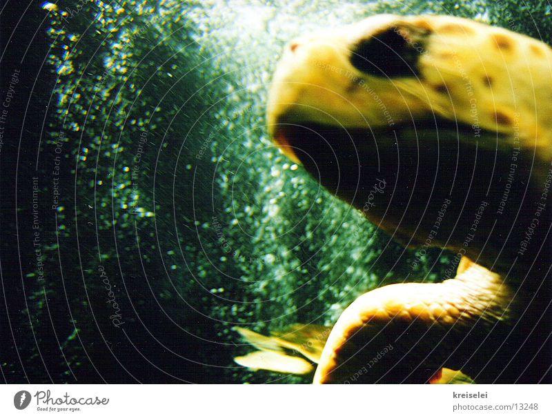 Schildkröte mit Köpfchen Aquarium grün gelb Meer Verkehr Wasser