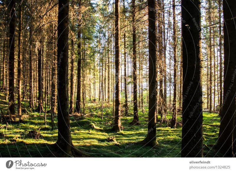 Norwegen V Natur Ferien & Urlaub & Reisen Pflanze blau grün Landschaft Ferne Wald Umwelt Wiese Freiheit braun Tourismus Erde wandern groß